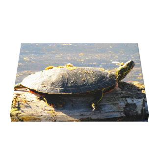 Sköldpadda slågen in kanfas canvastryck