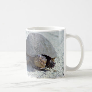 Sköldpaddafoto Kaffemugg