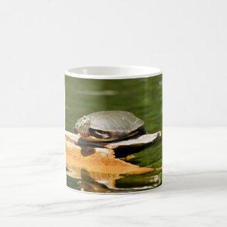 Sköldpaddakaffemugg Kaffemugg
