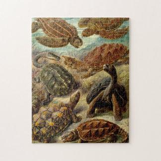 Sköldpaddor vid Haeckel Pussel