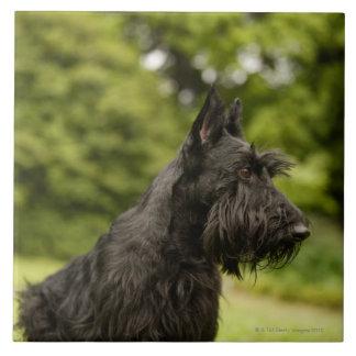 Skotsk Terrier Kakelplatta