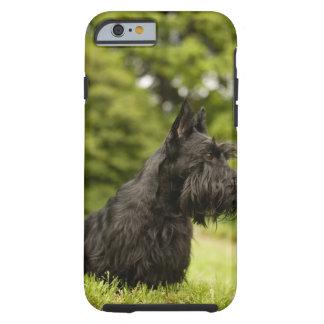 Skotsk Terrier Tough iPhone 6 Fodral