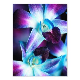 Skräddarsy Orchids för lila- & blåttDendrobium Orc Fototryck