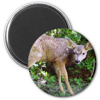 Skrämmd lite hjort magnet rund 5.7 cm