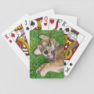 Skratta den hundBerger Picard valpen som leker Spelkort