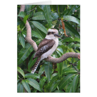 Skratta det Kookaburra hälsningkortet Hälsningskort