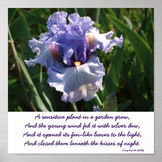 """Skriv ut """"en känslig växt i en trädgård växte """", poster"""