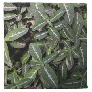 Skugga servetter för sammetväxttrasa