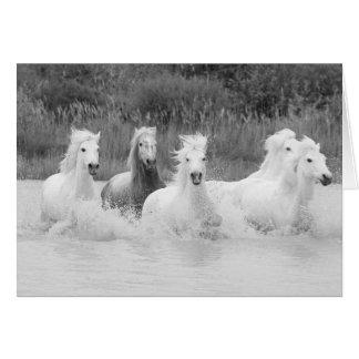 Skuggar av grå färg - hästhälsningkort hälsningskort