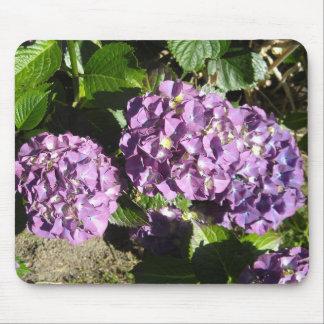 Skuggar av purpurfärgad vanlig hortensia musmatta