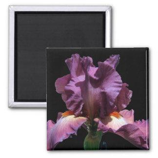 Slå purpurfärgad Iris Magnet