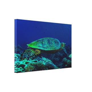 Slågen in kanfas för Hawksbill hav sköldpadda Canvastryck