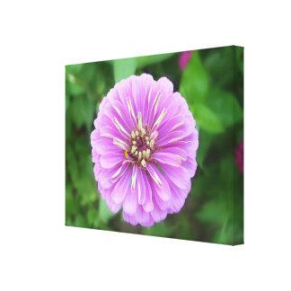 Slågen in kanfas - - naturlig lila Zinnia Canvastryck