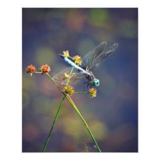Sländan på vilar, naturens juvel fototryck