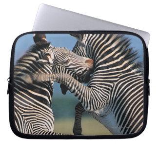 Slåss för zebror (Equusburchellien) Laptop Datorfodral