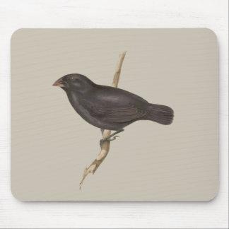 Slipad Finch för medel Musmatta