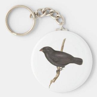 Slipad Finch för medel Rund Nyckelring
