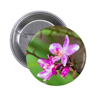 Slipad Orchid för delikat rosor i en tropisk Standard Knapp Rund 5.7 Cm