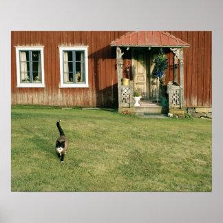 Slitet rött hus med en katt på lawn.en posters