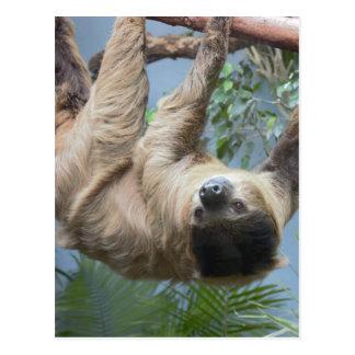 Sloth Vykort