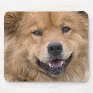 Slut upp av chowblandninghunden outdoors. musmatta