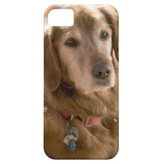 Slut upp av den guld- hunden för labrador iPhone 5 Case-Mate skal