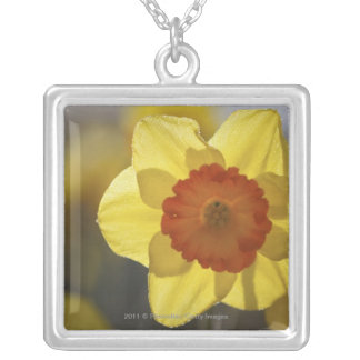 Slut upp av en gul/orange påsklilja silverpläterat halsband