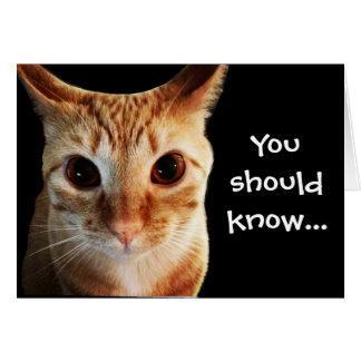 Smör älskar dig som den roliga katten noterar OBS kort