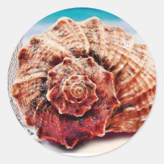 Snäcka för strandhavhav runt klistermärke