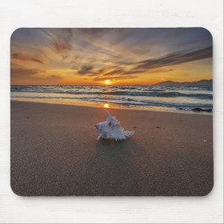 Snäcka på stranden på ön för solnedgång | Kos Musmatta