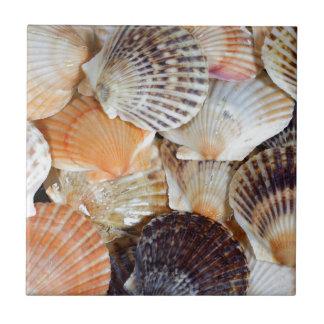 Snäckor av den kammusslaartZyclochlamys patagen Kakelplatta