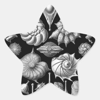 Snäckor och fossil i svartvit 1 stjärnformat klistermärke