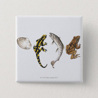 Snäckskal Salamander, lax Standard Kanpp Fyrkantig 5.1 Cm