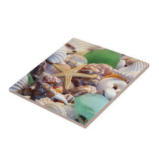 Snäckskal & sjöstjärnan belägger med tegel kakelplatta