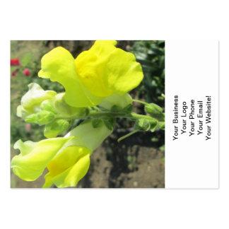 Snapdragon gultblomma set av breda visitkort