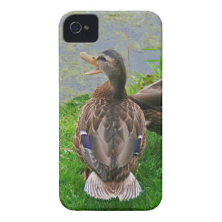 Snattra ankan iPhone 4 case