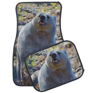 Sniffa plats för Kermode (ande) björndjurliv Bilmatta