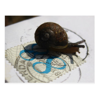 snigeln postar vykort