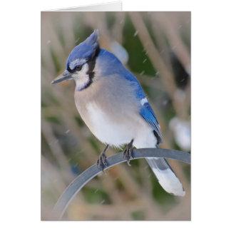 Snö Jay - blåttJay fågel Hälsningskort