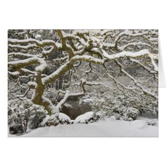 Snö-täckt japansk lönn 2 hälsningskort