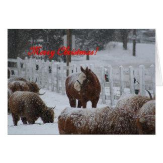 Snöhäst, god jul! hälsningskort