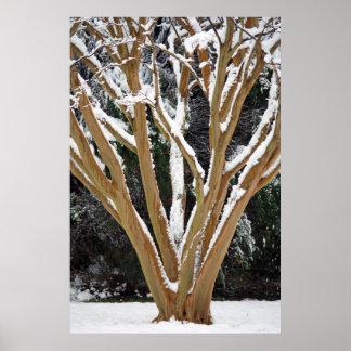 Snöig kräppmyrtenkanvastryck print