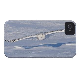 Snöig uggla i flyg. 2 iPhone 4 Case-Mate fodraler