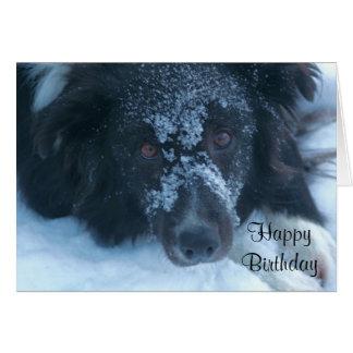 Snöig vänt mot kort för födelsedag för gränsCollie