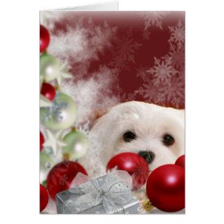 Snowdrop den maltesiska julkortet hälsningskort