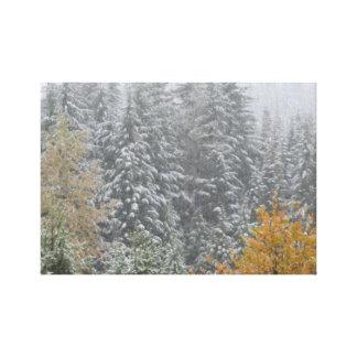 Snowfall i Whistler, B.C. Canvastryck