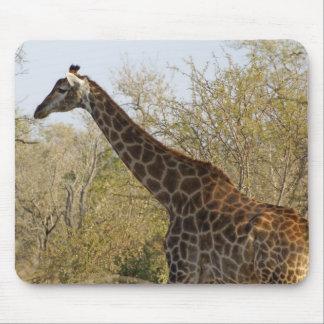 Södra - afrikansk giraff mus mattor