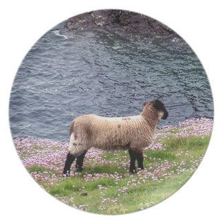 Södra anseende för Devon kustenLamb i Pinks Tallrik