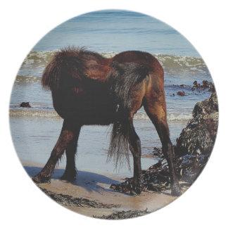 Södra Biteing för Devon strandDartmoor ponny svan Tallrik
