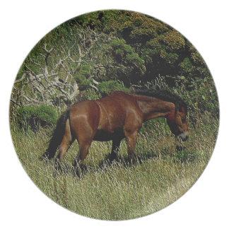 Södra Dartmoor för Devon kustenväg ponny Grazeing Tallrik